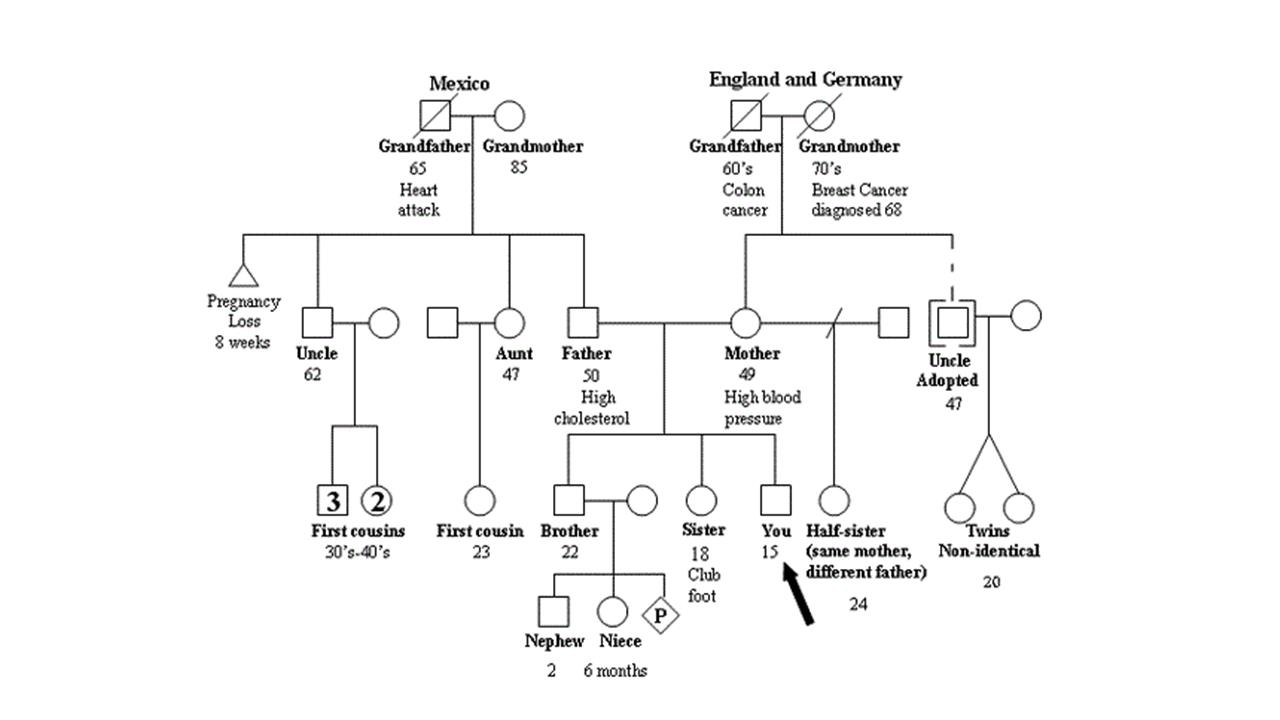 Medical genealogy vita brevis for Family history genogram template
